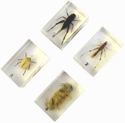 ENCASED INSECT SPECIMENS SET 2