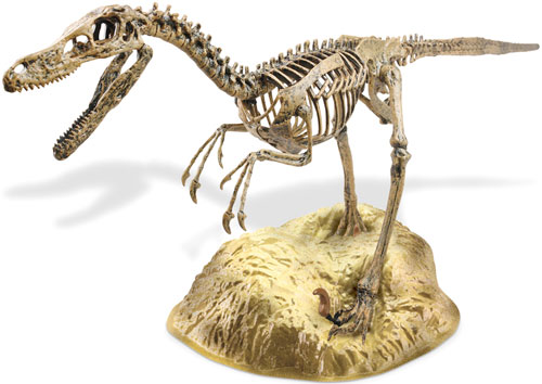 PLASTIC VELOCIRAPTOR SKELETON KIT