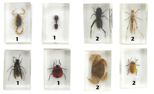 ENCASED INSECT SPECIMENS SET 1
