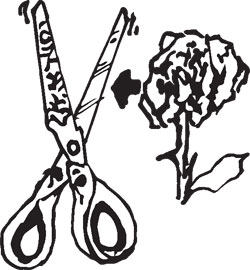 TATTOO GRAPHIC SCISSORS
