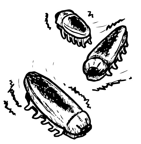 "1-3/4"" ELECTRIC COCKROACHES"