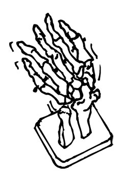 RIGHT HAND SKELETAL MODEL